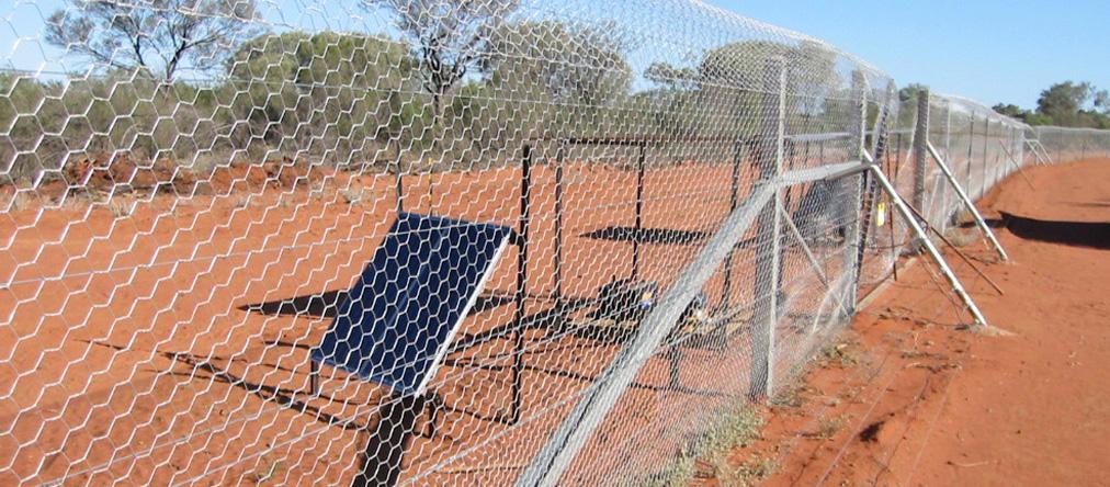 Bilby-Fence2